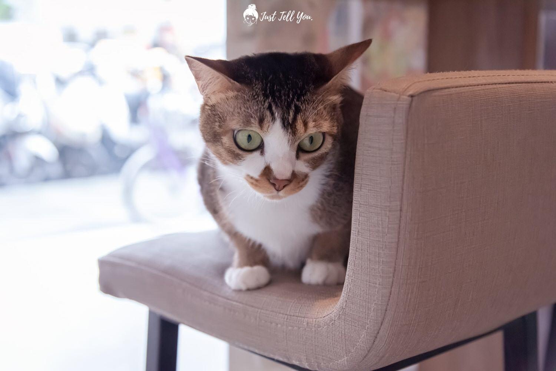 台北中山區 House Cafe寵物友善咖啡廳