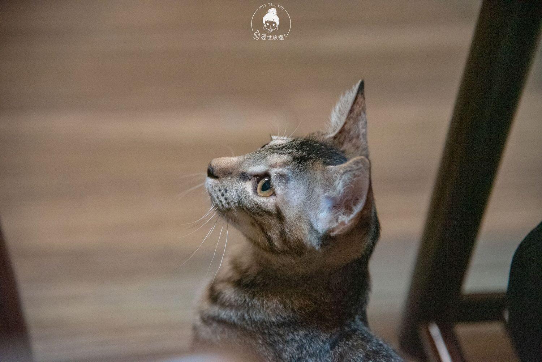 台北、中山|弄宅咖啡,到百年老宅與貓咪來一場心靈交流