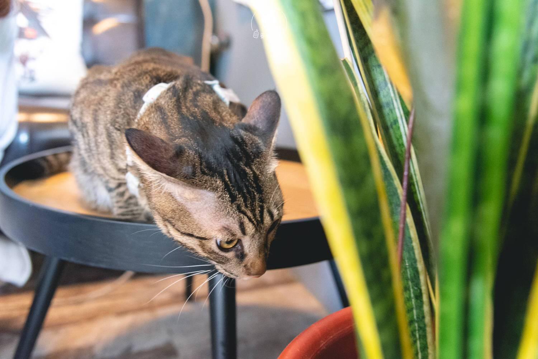 台北、北投 穠咖啡 Nong Coffee Roaster與貓主子來質感咖啡廳塗一個幽靜 寵物友善