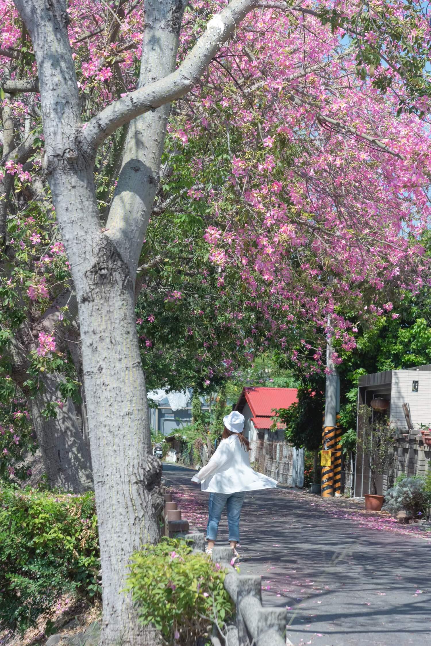 彰化、北斗 北斗河濱公園,浪漫粉紅樹海・秋天就是個浪漫的季節